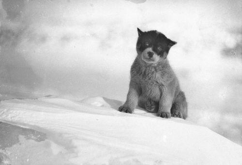 Rare Photography of the First Expedition to Antarctic
