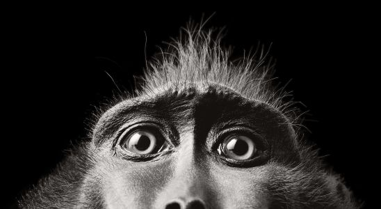 Through the Lens of Photographer Tim Flach