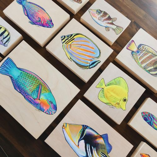 Colorful Tropical Fish