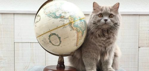 Journée internationale du chat : les 5 chats les plus mignons d'Instagram