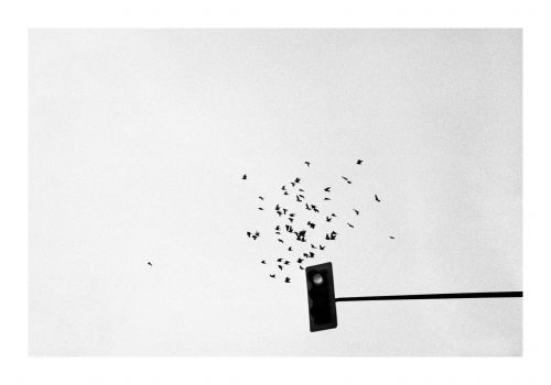 The Visual Poetry of Sébastien Rivest in Black and White