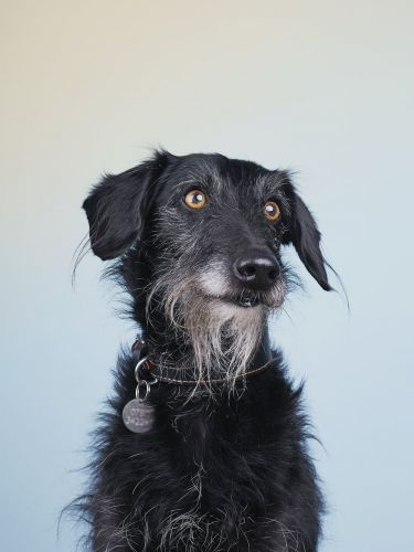 Lovely and Contemporary Dog Portraiture