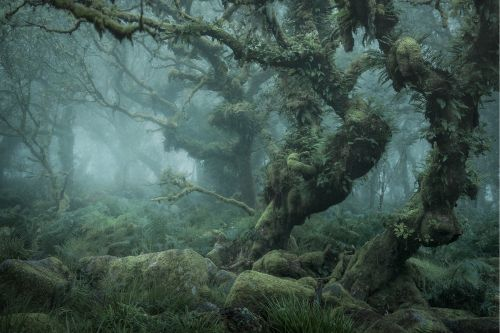 Discover the « Mystical » side of the Woodland, by Neil Burnell