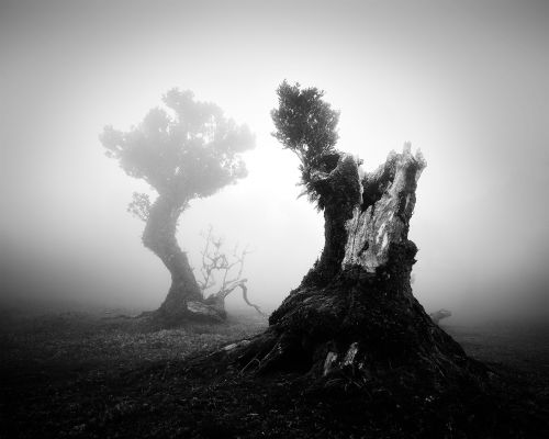Magnificient Old Trees