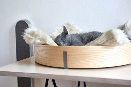 Contemporary Cat Furniture that Goes Well in Any Home