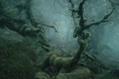 Enduring Beauty of a Mysterious Tolkien-Like Forest